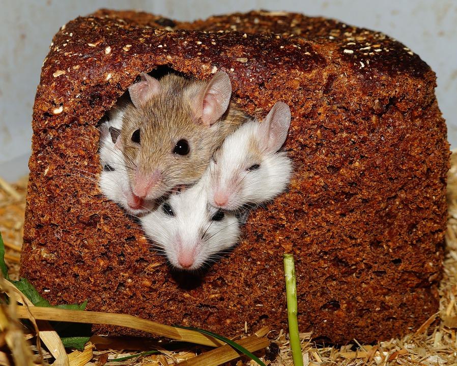 Byty nejsou rohlíky a lidi nejsou myši.